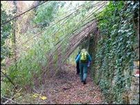 tunnel di bambu