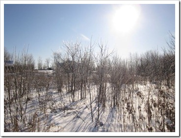 20120114_winter-property_003