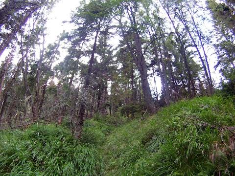 starý les, cykloraj