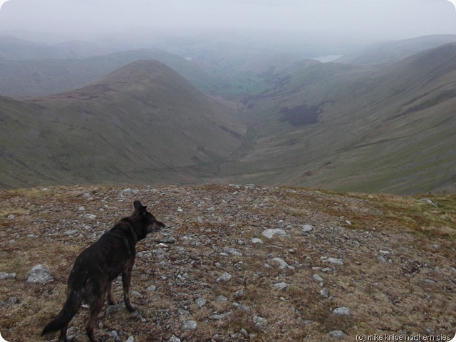 the nab, the dog, getting misty