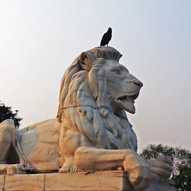 Lion  by PhotographybyAvanish Avanish - Buildings & Architecture Statues & Monuments ( statue, avanish singh, kolkata, crow, victoria, photographybyavanish )