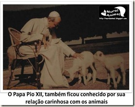 papa_ama_gatos (13)
