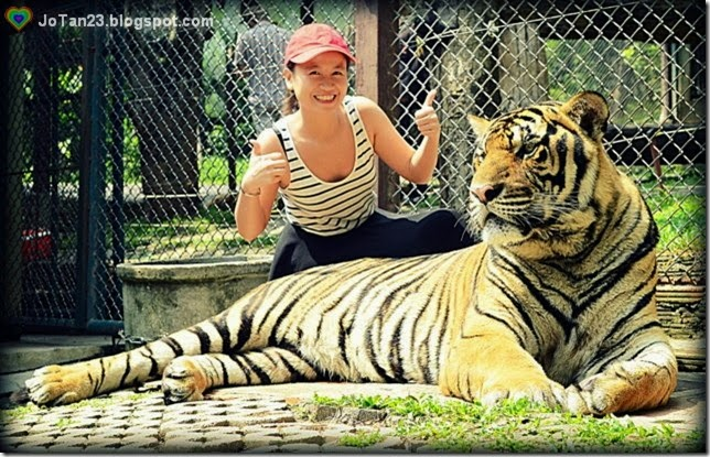 things-to-do-in-chiang-mai-tiger-kingdom-jotan23
