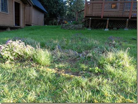4-14 cabin front yard 2