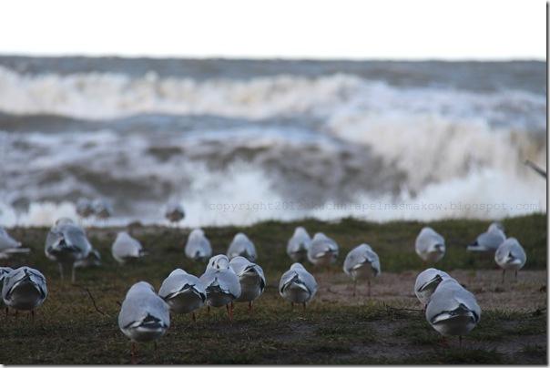 Styczniowe morze i bułeczki z zurawiną i marcepanem (2)