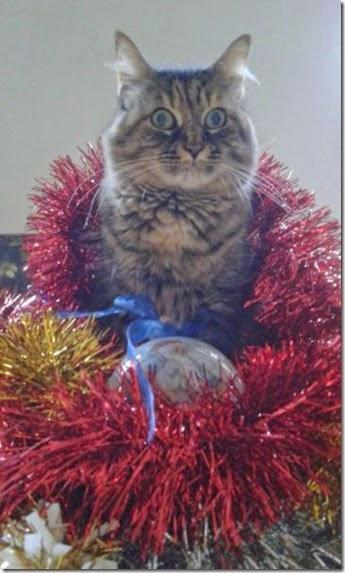 pets-hate-christmas-005