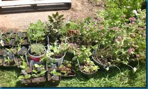 garden club plant sales