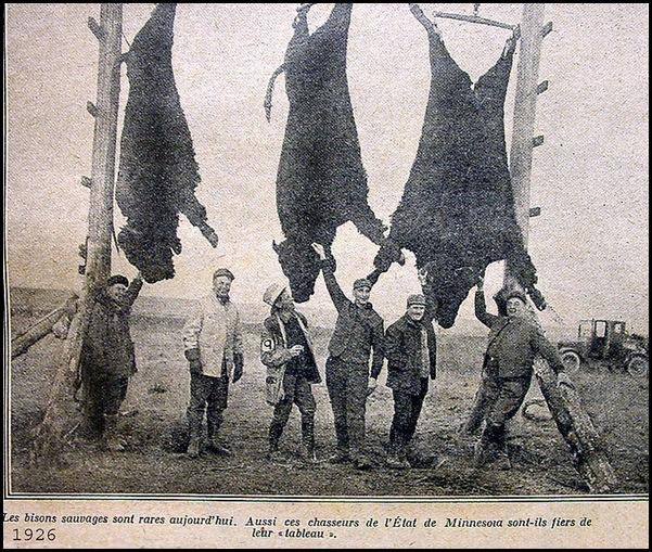 Le massacre des bisons en Amérique-6