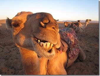 Sonrisa Camel
