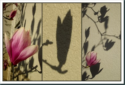 shadow art2
