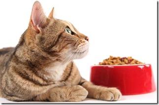 ciotole-gatti-consigli-regole