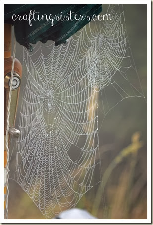 Double Spider Web