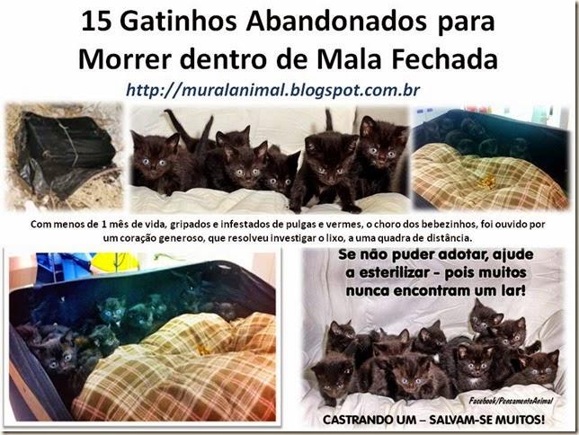 15 Gatinhos Abandonados para Morrer dentro de Mala