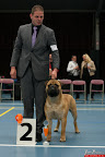 20130510-Bullmastiff-Worldcup-0549.jpg