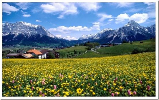 flores wallpapers - campo florido