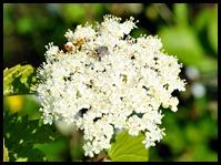 03g4 - Knight Trail - flowers