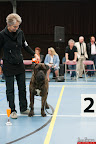 20130510-Bullmastiff-Worldcup-0999.jpg