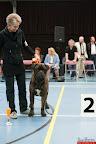 20130510-Bullmastiff-Worldcup-0999.jpg
