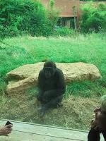 2013 - Visite du zoo d'Amnéville 8 septembre 2013