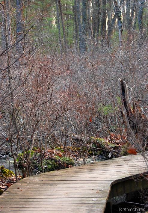 6. Skug river boardwalk-kab