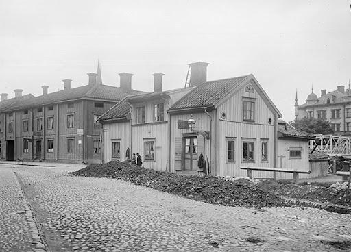 svartbackstull-1901-02.jpg