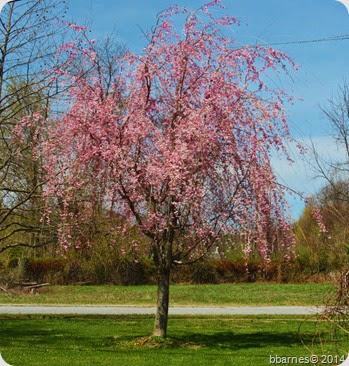April 28 blooming