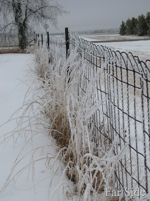 Frosty Fences