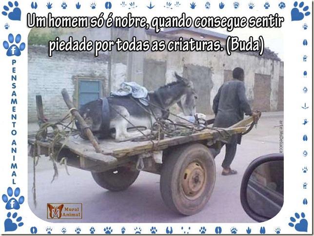 piedade_animais