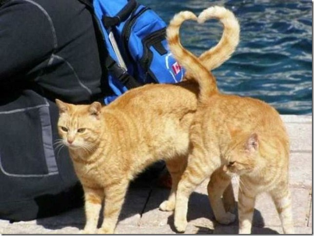 cats-timed-perfectly-8
