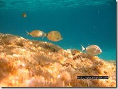 Vita sottomarina - Lampedusa