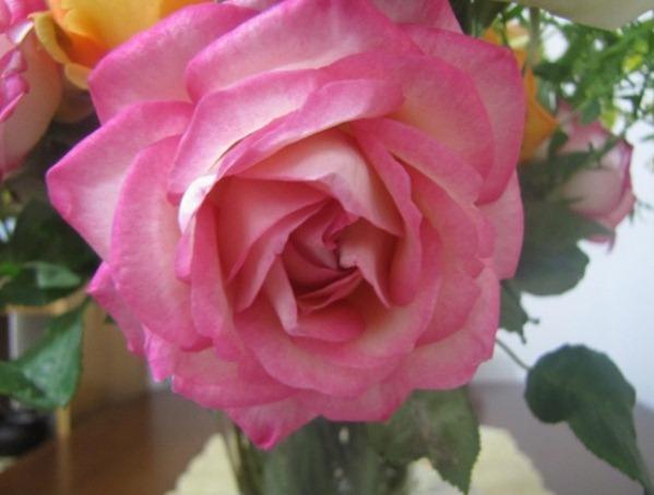 Dicas para rosas vivas e bonitas  imagens de flores
