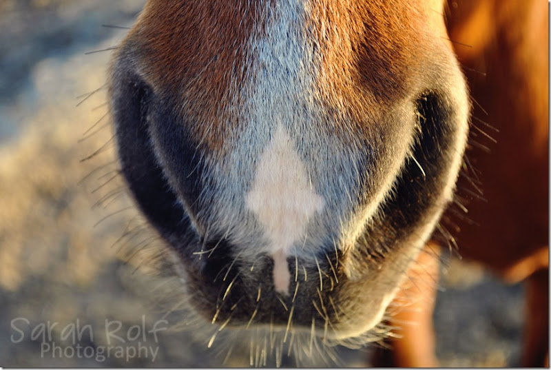 horse-nostril