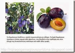 τα φρούτα του φθινοπώρου (4)