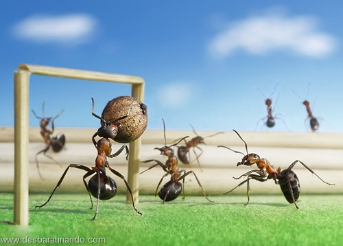 formigas inacreditaveis incriveis desbaratinando  (18)