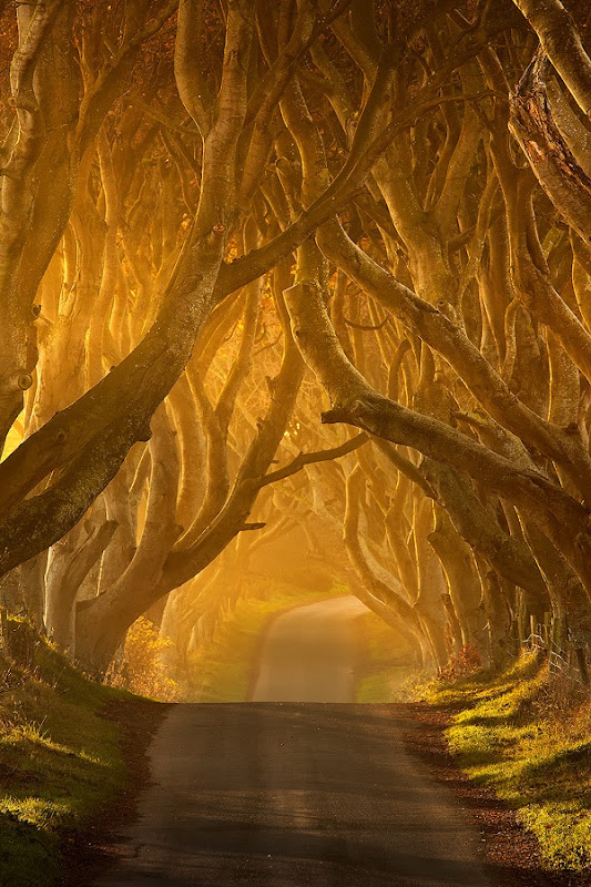 dark-hedges-9