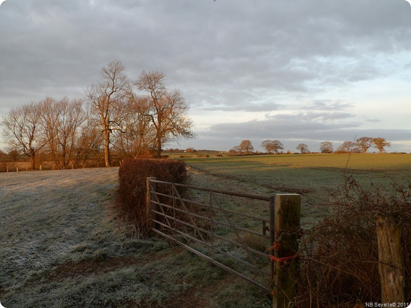 SAM_0009 Frosty Fields