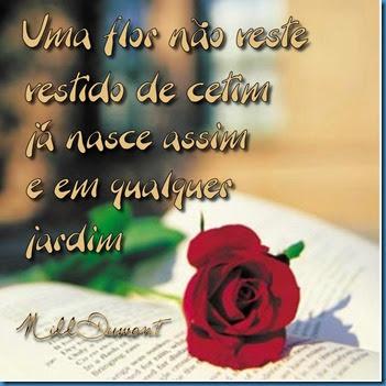 Rosa01
