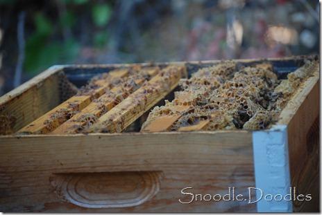 Beekeepers 09-11 013