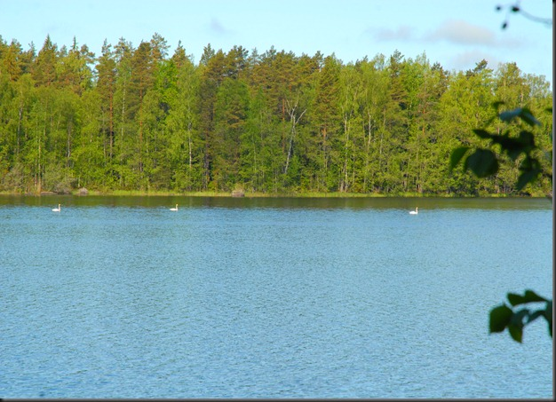 haukijärvi sudenkorento 037