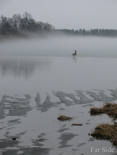 Transition Geese and Fog