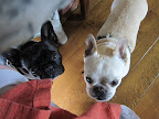 Martha, that bacon sure smells divine.  You know, we Frenchies really like bacon.
