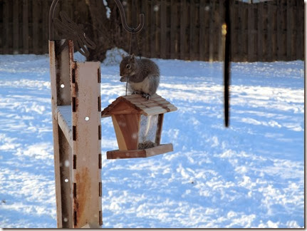 squirrel12-18-13a