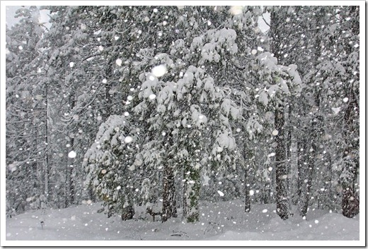121223_snow_023