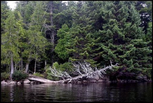 Prong Pond 087