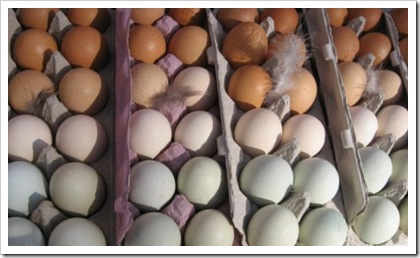 eggs woodstock farm festival