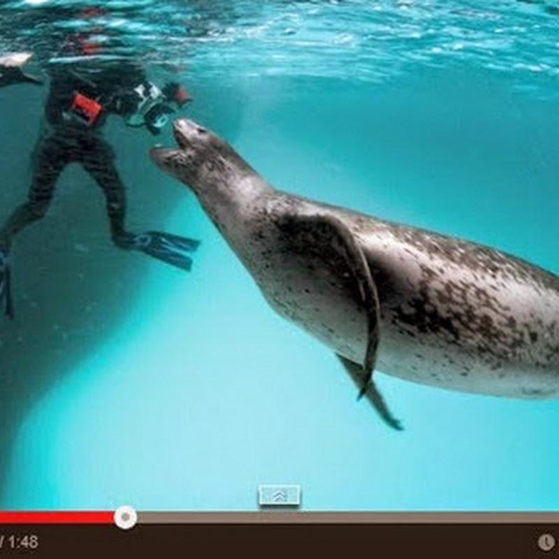 Πρόσωπο με πρόσωπο με ένα θανάσιμο θαλάσσιο ζώο