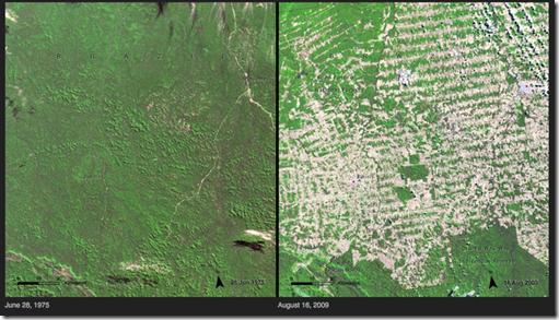 Deforestación - Brasil
