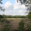 Uitzicht door de bomen - www.LandgoedDeKniep.nl