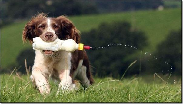 Cachorro alimentando um cordeiro (5)