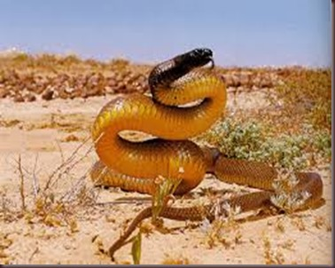 Amazing Pictures of Animals. Poison, Dangerous.8.Inland Taipan.Alex
